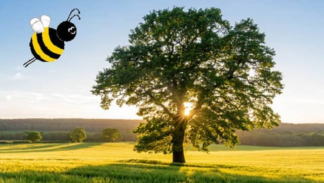 Baumspende Remeha 2021
