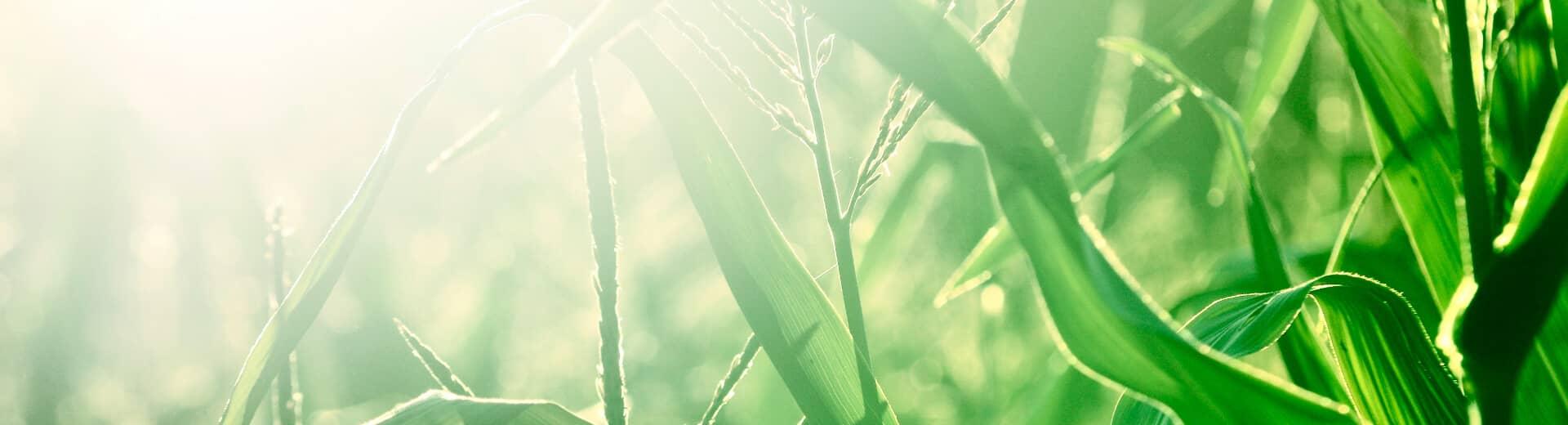 Nachhaltigkeit mit Remeha